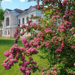 20. juuni: peenrapidu Kärstna mõisapargis Viljandimaal