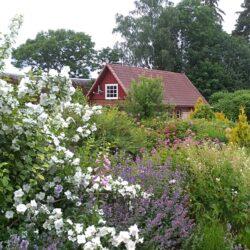 15 August: Open garden day at Mikko farm, Põlva county