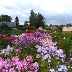 15. august: Mikko talu avatud aia päev Põlvamaal
