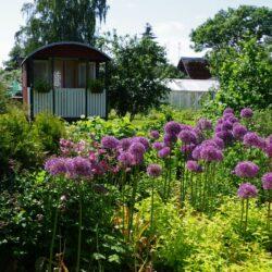 1. august: Mikko talu Südamate aia kodukohvik Põlvamaal